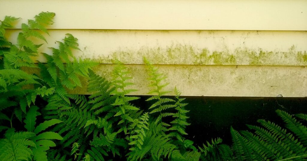 Ask the Builder: How to clean algae off siding, roofs and patios